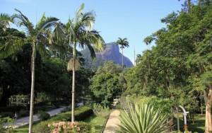 Botanic Garden Rio de Janeiro
